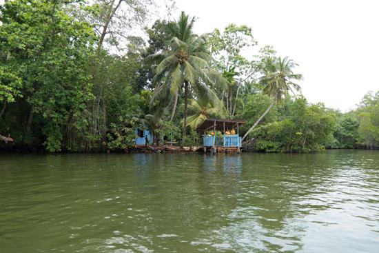 Balapitiya - Boottocht op de Madu rivier-0150