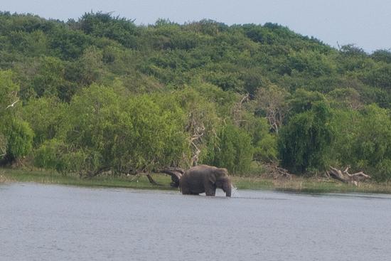 Yala National Park Olifant steekt het meer over-1100