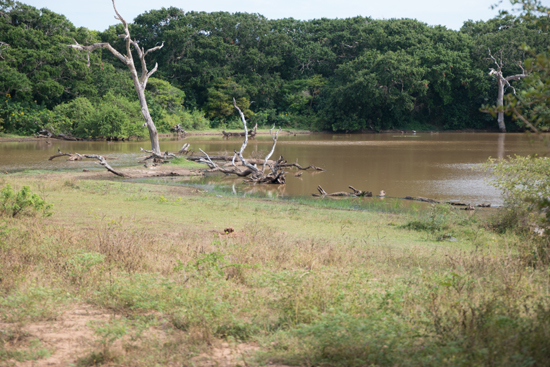 Yala National Park-1120