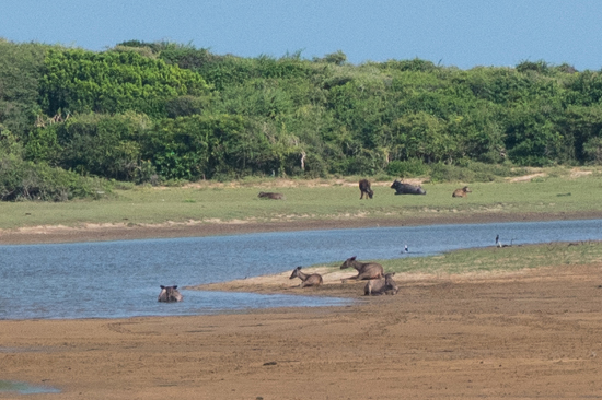 Yala National Park-1160