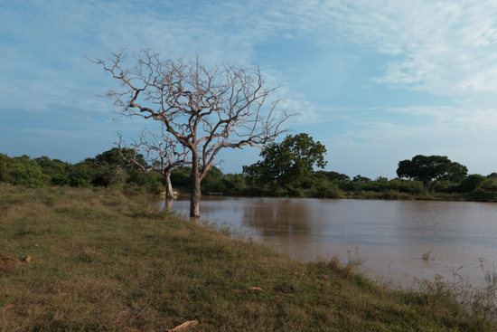 Yala National Park-1270