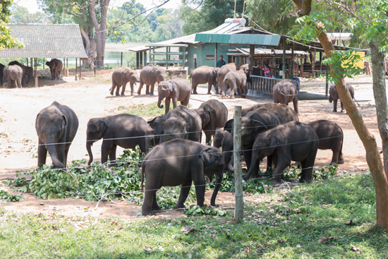 Udawalawe Transit Home Opvangcentrum voor olifanten-1370