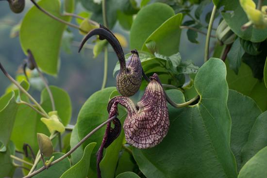 Mooie bloementuin tijdens lunchstop op weg naar Nuwara-Eliya-1820