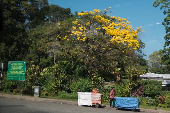 Kandy - Paradeniya Royal Botanic garden-2020