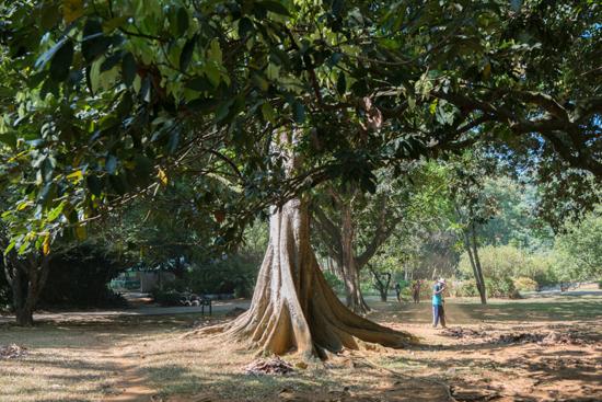 Kandy - Paradeniya Royal Botanic garden-2040