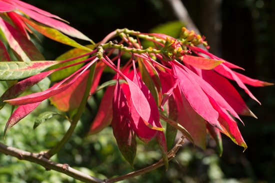 Kandy - Paradeniya Royal Botanic garden-2090