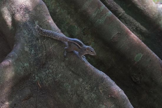 Kandy - Paradeniya Royal Botanic garden-2150