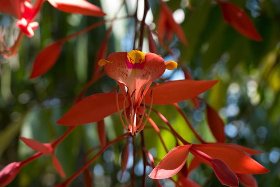 Detail van deze schitterende boom-2160