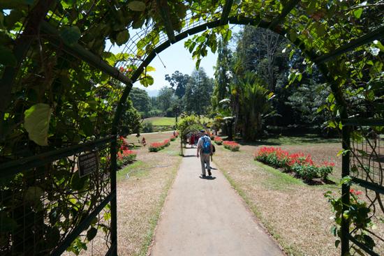 Kandy - Paradeniya Royal Botanic garden  Flower Garden-2200