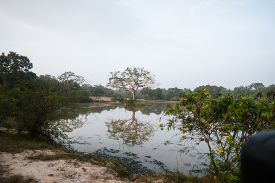 Wilpattu National Park-3370