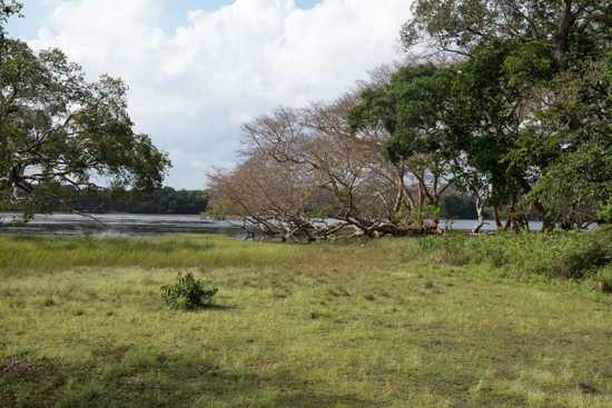 Wilpattu National Park-3440