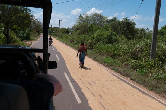 Onderweg naar Jaffna  Het drogen van het gewas op het asfalt-3470