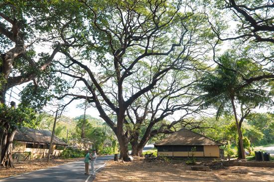 Trincomalee-3870