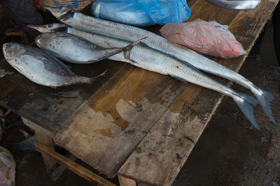 Negombo Vismarkt-4220