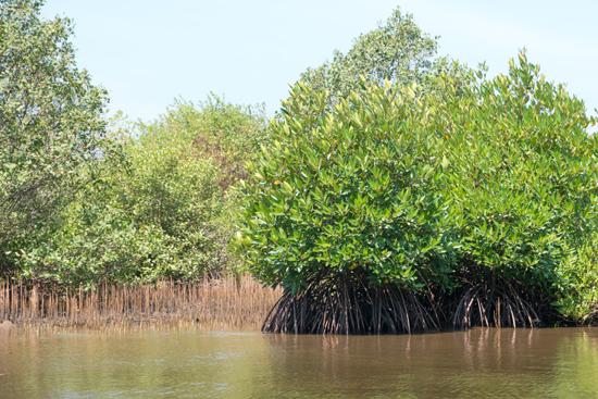 Negombo Boottocht -4300