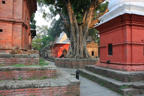 Pashupatinath tempel-0470
