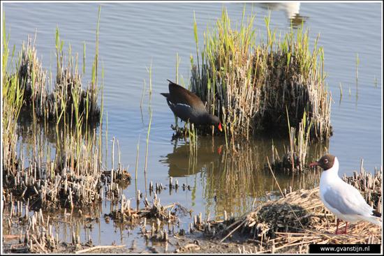 Vogels03 Vogelbroedplaats<br><br>Schellinkhout IMG_5228.jpg