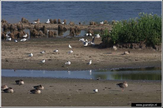 Vogels03 Vogelbroedplaats<br><br>Schellinkhout IMG_5283.jpg
