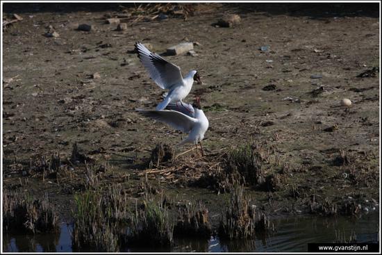Vogels03 Vogelbroedplaats<br><br>Schellinkhout IMG_5293.jpg