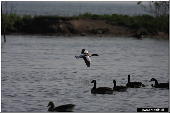 Vogels03 Onderdijk IMG_5360.jpg